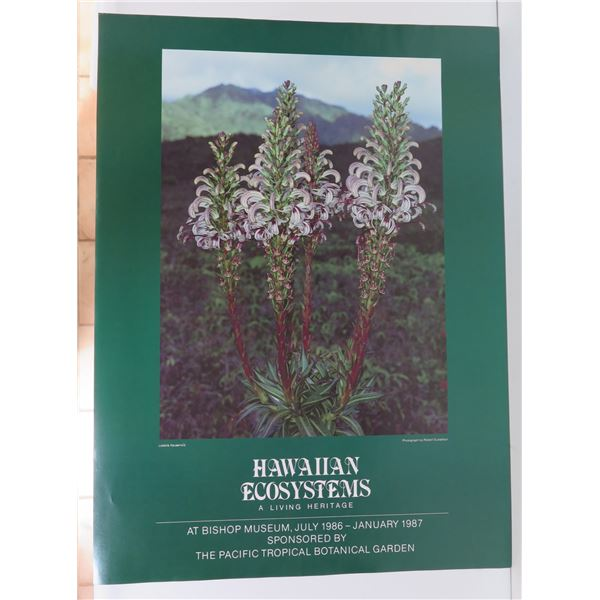 "Hawaiian Ecosystems Poster, Bishop Museum 1986-1987 18"" x 24.5"""
