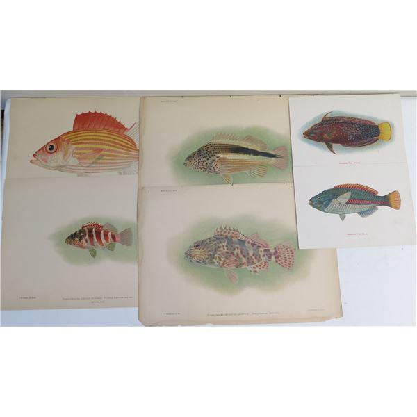 Qty 6 Hawaiian Fish Prints