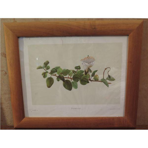 "Framed Art, ""Puapilo"" Botanical Print, Leighton Brothers Printers 17"" x 14.25"""