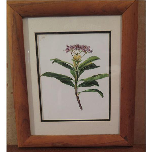 "Framed Art, Botanical Print, Purple/Green/Yellow/White 14"" x 17.25"""