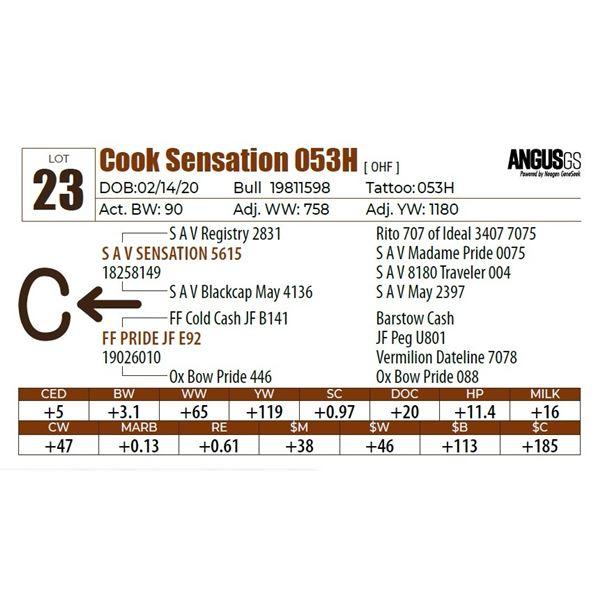 Cook Sensation 053H