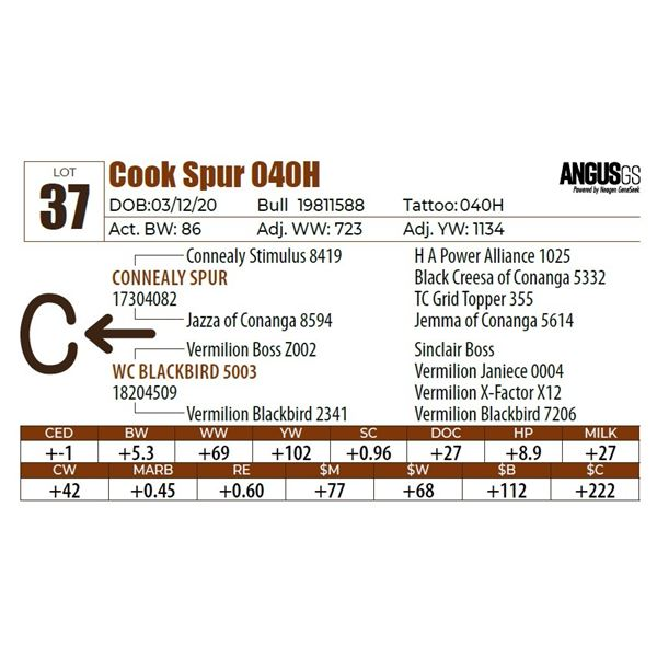 Cook Spur 040H