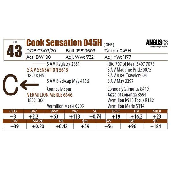Cook Sensation 045H