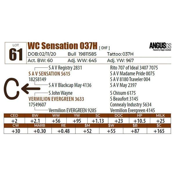 WC Sensation 037H