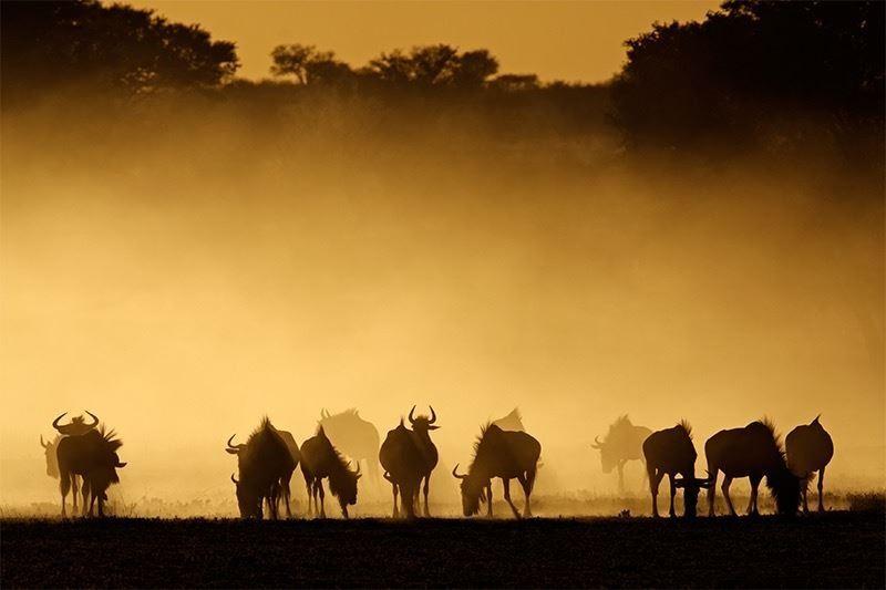 Primus Villas African Photo Safari