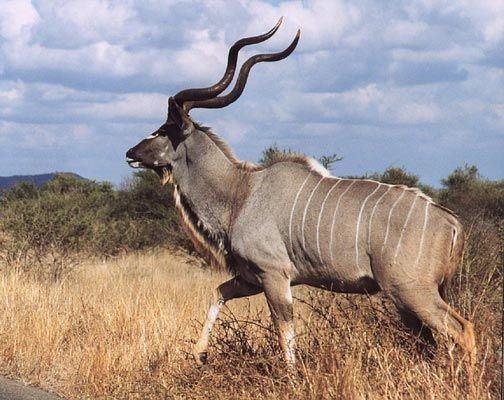 Kido Hunting Safari