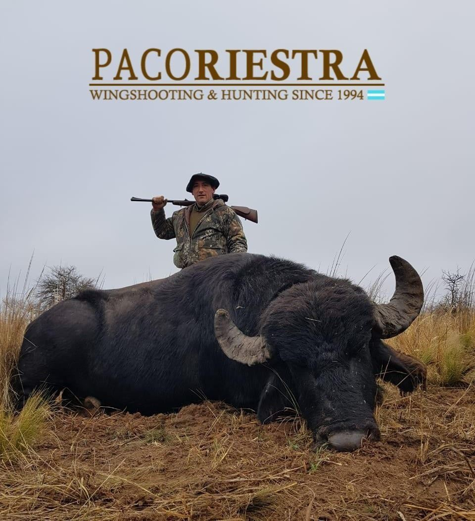 Paco Riestra Red Stag