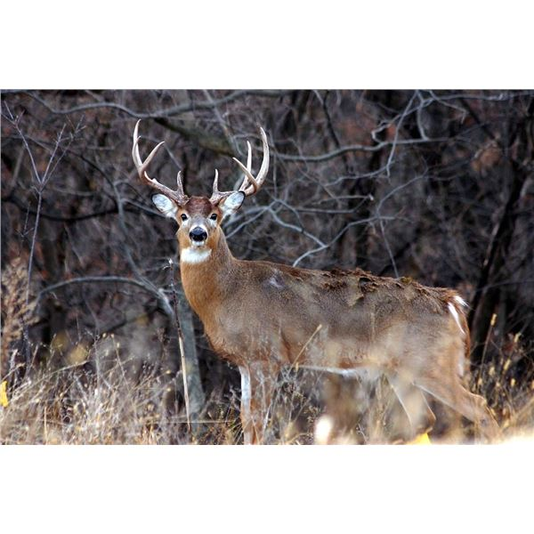 Illinois Deer hunt with Graveyard Whitetails