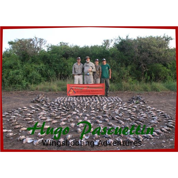4 Days of High-Volume Dove Shooting for 4 Hunters in Cordoba, Argentina