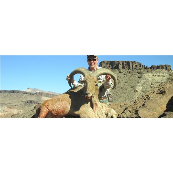 3-Day Free Ranging Aoudad Hunt for 1 Hunter in West Texas