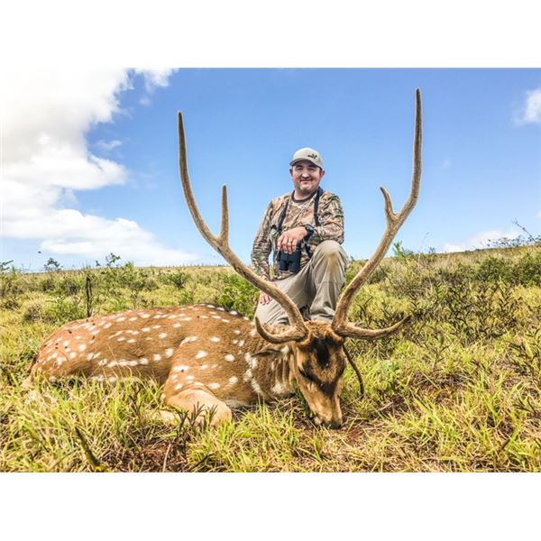 2-Day Axis Deer Hunt for 2 Hunters in Lanai, Hawaii