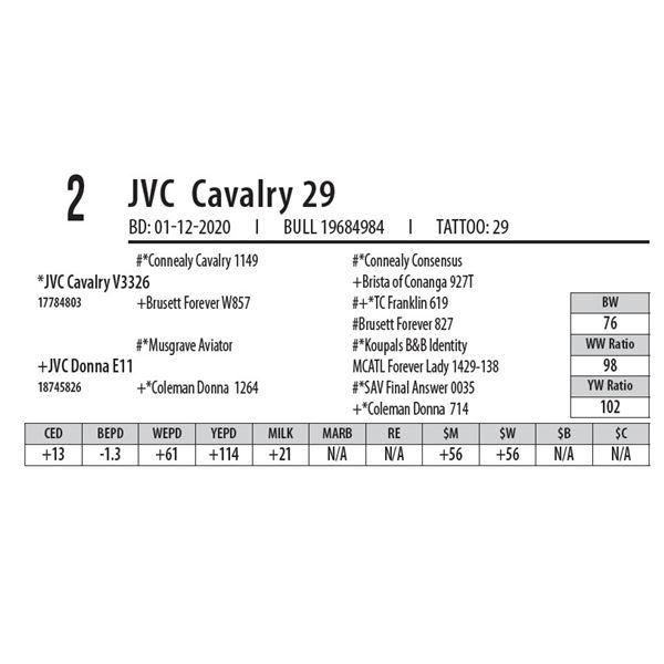JVC Cavalry 29