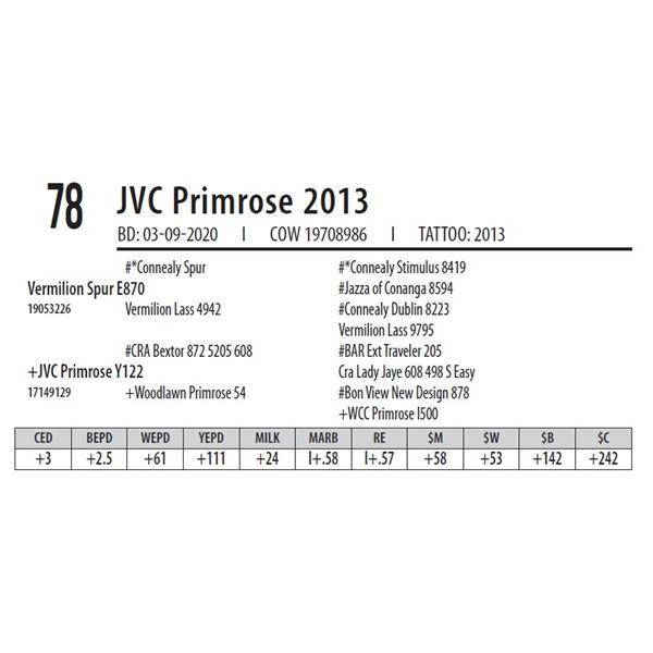 JVC Primrose 2013