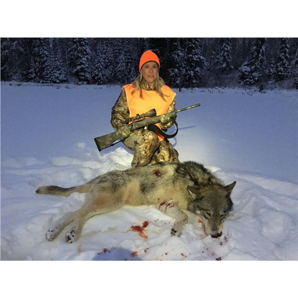 7 Day Wolf Hunt and Ice Fishing for 2 hunters