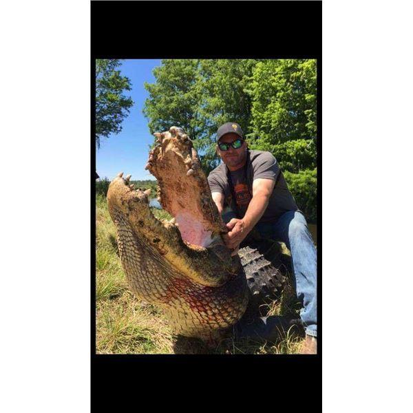 2-Day Florida Alligator Hunt for one Hunter