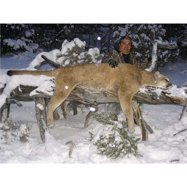 Mountain Lion Hunt in Nevada