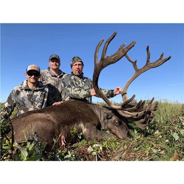 8-Day Caribou Hunt for 2 Hunters in Alaska