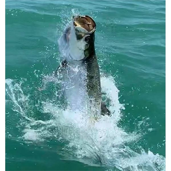 3 Days of Fishing for 2 Anglers near Marco Island/Naples Florida