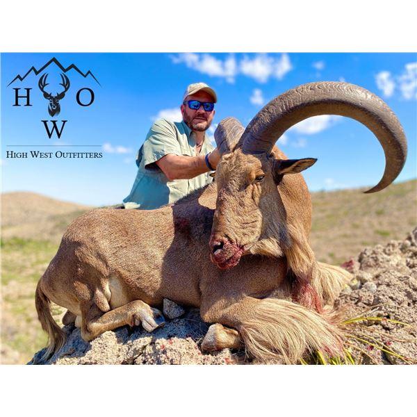 West Texas Trophy Aoudad Hunt for 1 Hunter