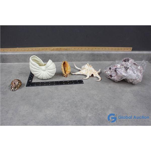 Assorted Sea Shells