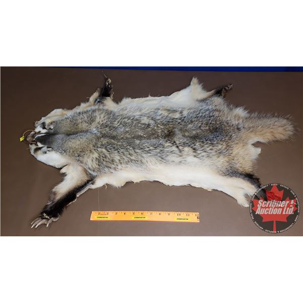 "Badger Pelt (36"" Total Length) (Canadian Buyers Only)"