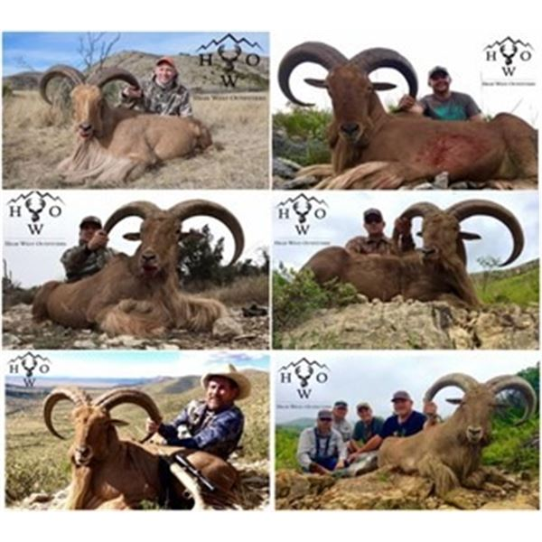 Texas Aoudad Hunt for 2 hunters