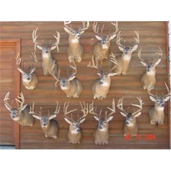 Kansas Whitetail Deer Hunt