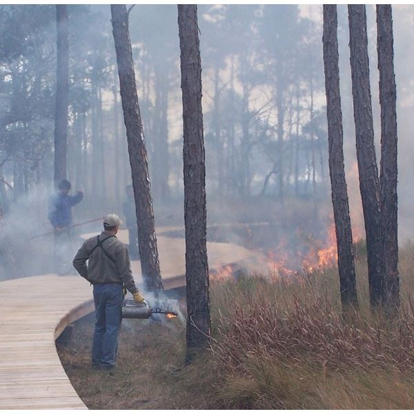 Wildlife/Forestry Consulting Package - Southern Forestry Consultants