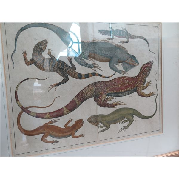 "Framed Art Print - Lizards & Other Reptiles 32""X28"""