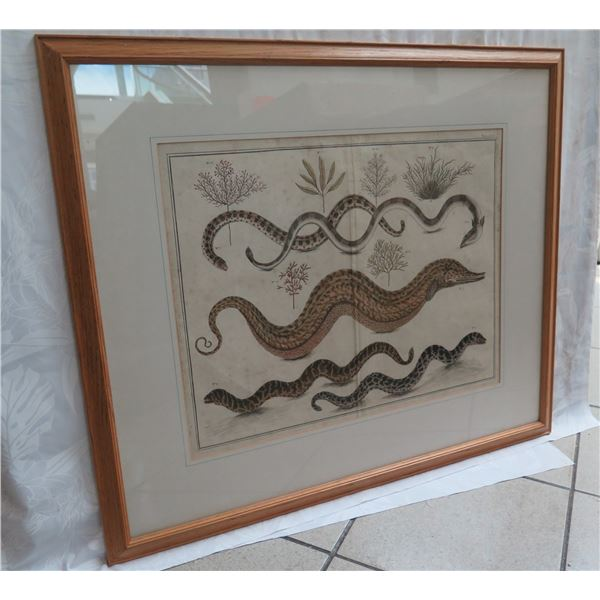 "Framed Art Print - Eels 32""X28"""