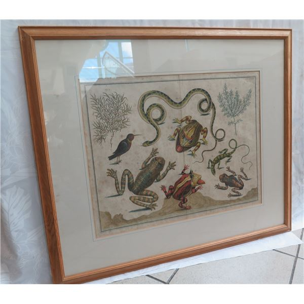 "Framed Art Print - Frogs & Other Amphibians/Reptiles 32""X28"""
