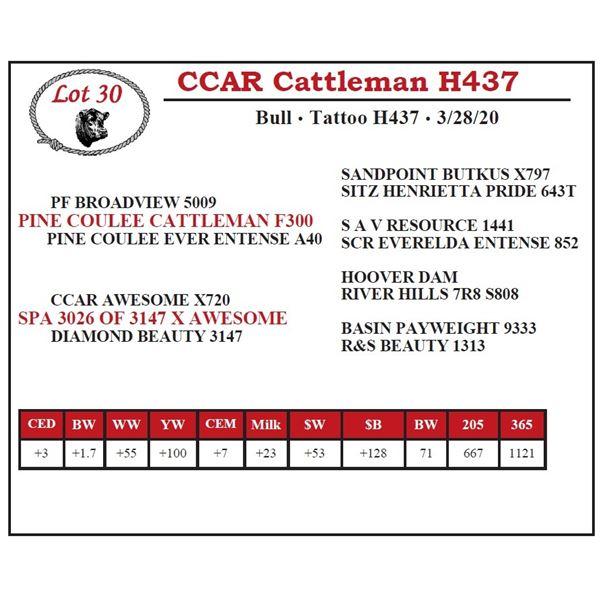 CCAR Cattleman H437