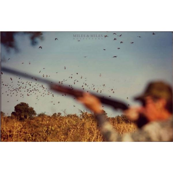 MILES & MILES OUTFITTERS 4-DAY 1X1 HIGH-VOLUME FULL HOUSE DOVE HUNT IN CORDOBA, ARGENTINA