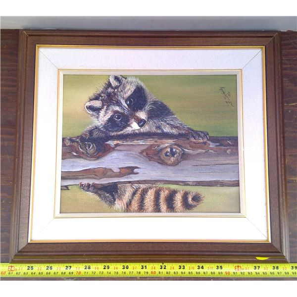 Racoon Picture