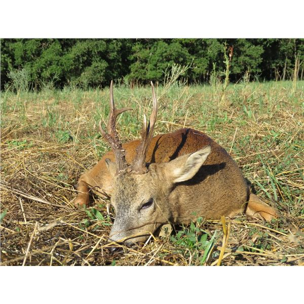 Spain Iberian Hunting Experience  4-day hunt and tour for 1 hunter & 1 non-hunter, choice of animals