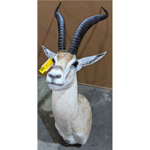 Taxidermy Antelope head mount w/tag number