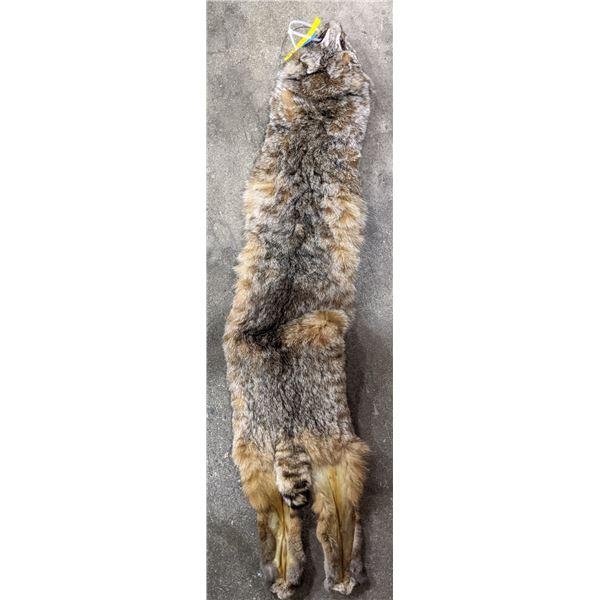 Bobcat fur hide