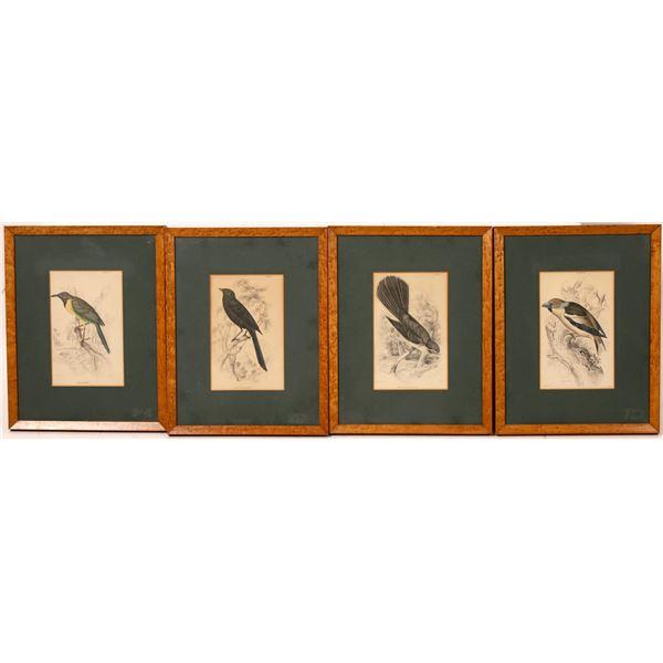Bird Illustrations  [131936]