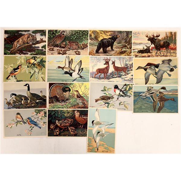American Wildlife Resources Postcards 1939  [132951]