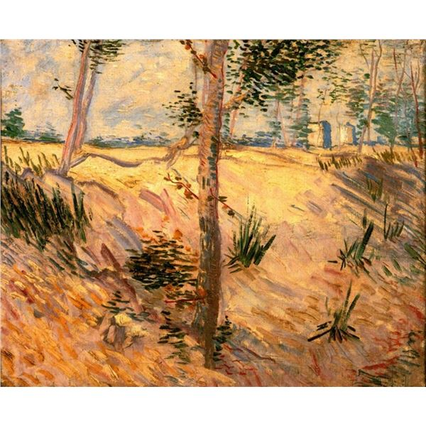 Van Gogh - Trees In A Field On A Sunny Day