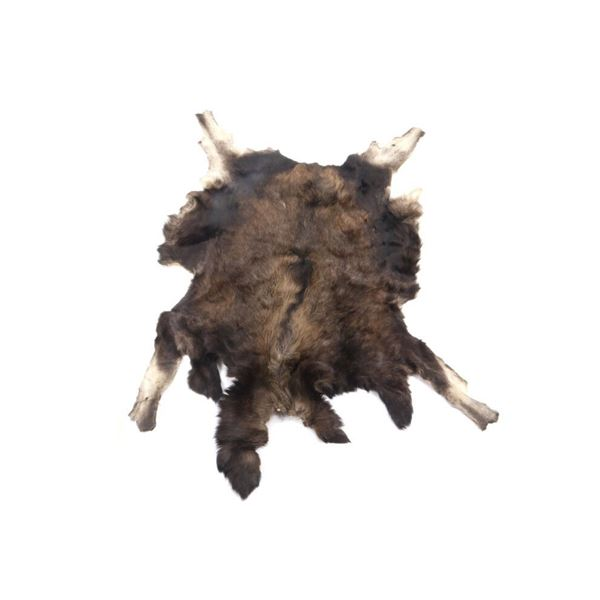 Montana Professional Taxidermy Tanned Moose Hide