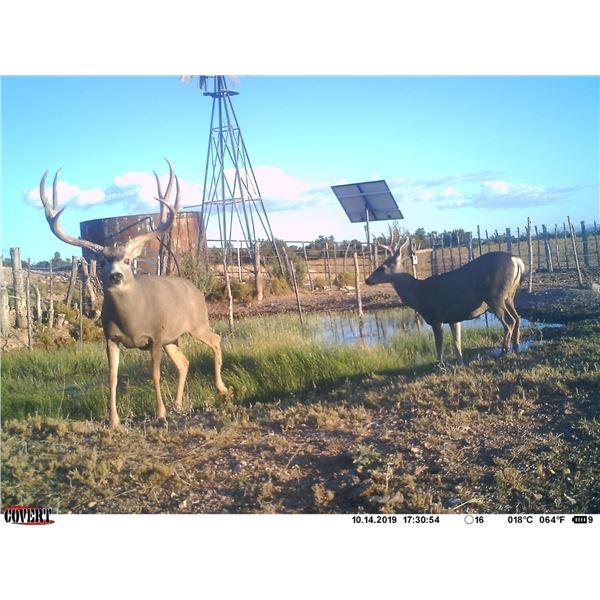 Arizona Archery Mule Deer Hunt