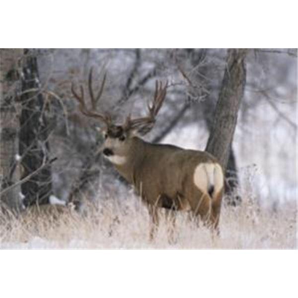 Utah Private Land DIY Deer Tag