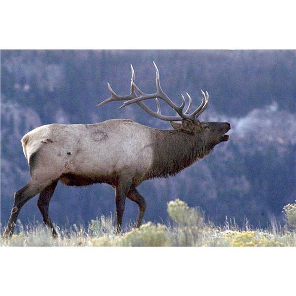 Utah/Nevada Pilot Mountain Bull Elk Tag