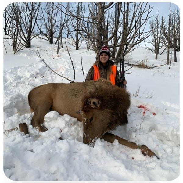 Utah DIY Cow Elk Hunt