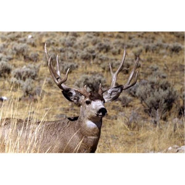 Utah DIY Mule Deer Hunt
