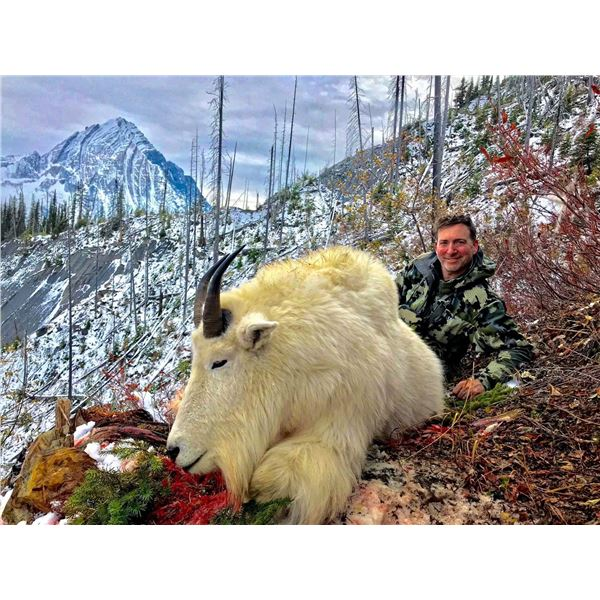 BC Mountain Goat Hunt