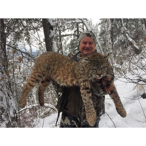 British Columbia Lynx Hunt
