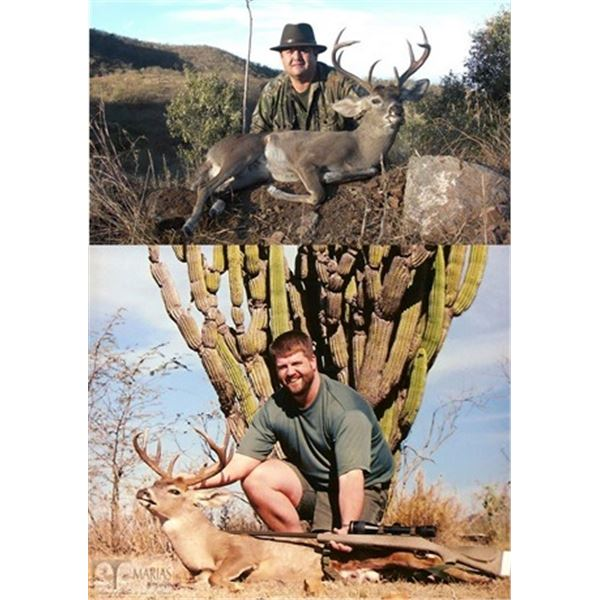 Coues Deer Hunt in Sonora, Mexico