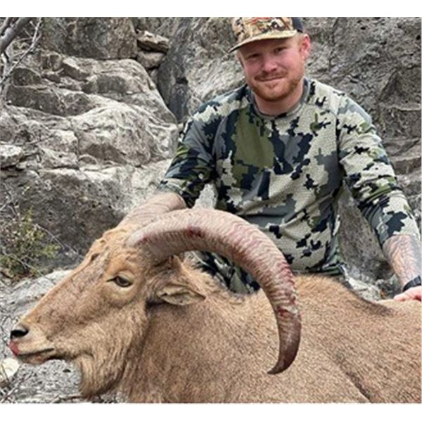 Aoudad Sheep Hunt in New Mexico